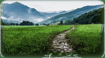 Wege zum Ziel in der Psychotherapie und Coaching