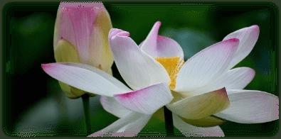 Gelassenheit, Ruhe, Psychotherapie Aschaffenburg